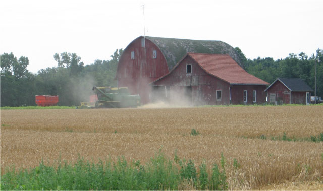Wheat harvest near St. Mary