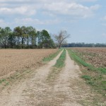 A piece of the Vincennes Tract treaty line